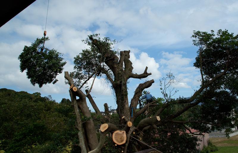 タブ伐採1bbk 2015-09-19 033.jpg