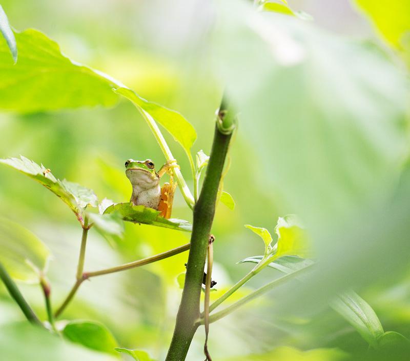 雨蛙bbk 2015-09-15 004.jpg