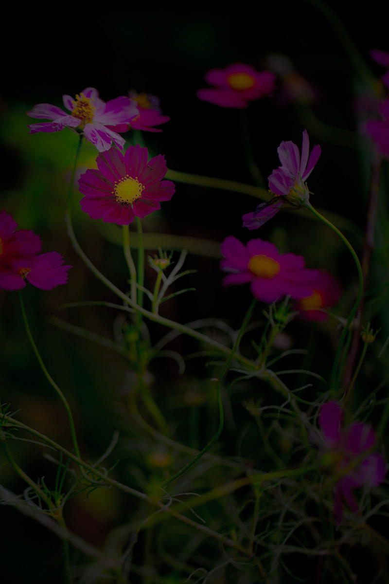 コスモスbbk 2015-09-15 204_edited-1.jpg