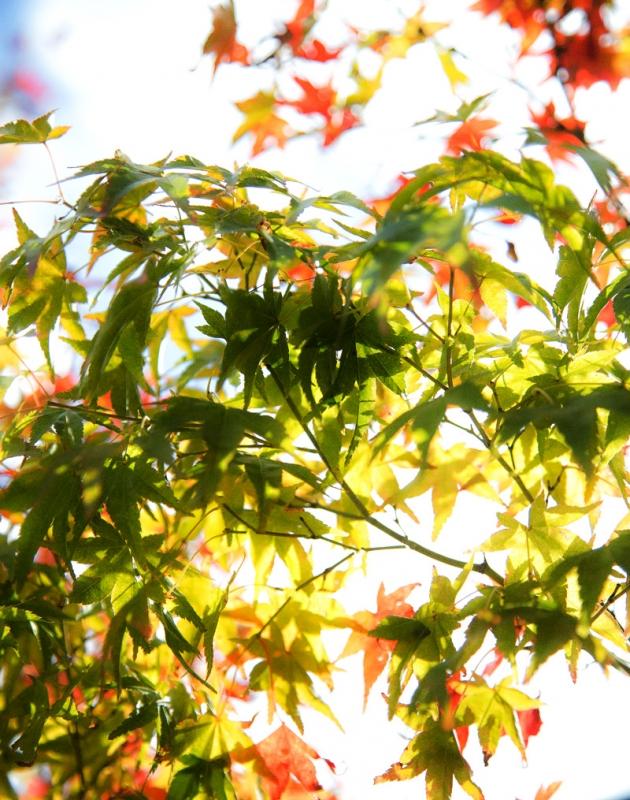 ����2015-10-31 014_edited-1.jpg