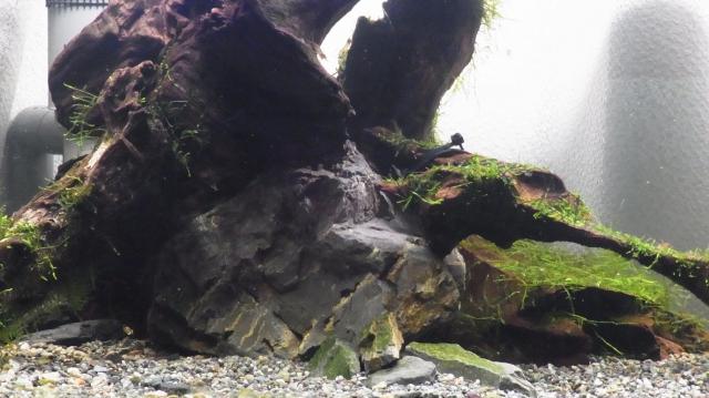 流木と石の絡み合い