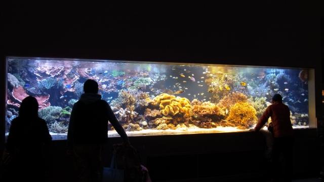 鳥羽水族館 華麗な水槽・魚・水棲生物たち