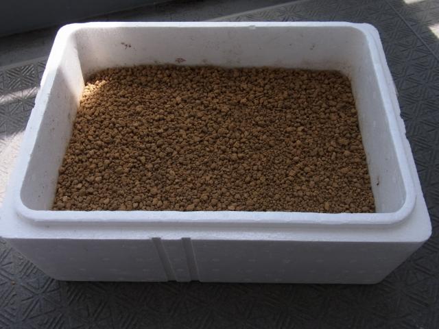発泡スチロール箱に赤玉土を入れる