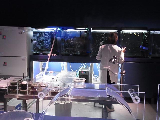 クラゲ飼育室