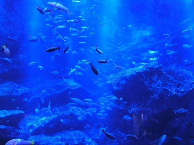 魚が沢山います