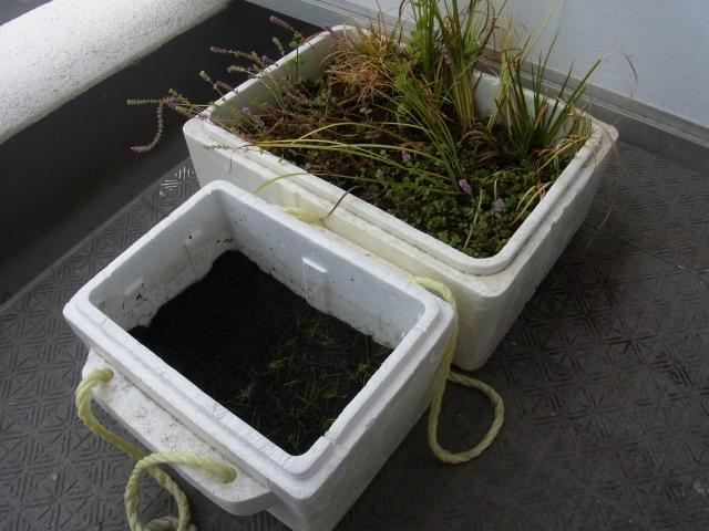 水草を水上化させて水上葉で水上栽培する方法