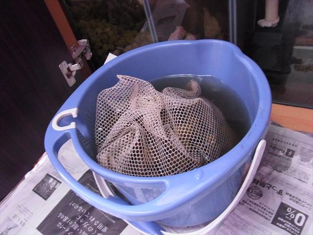 濾材をネットごとバケツに取り出す