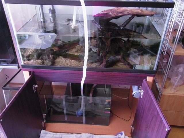 飼育槽から濾過槽に水を移す