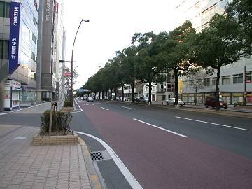 中央通り楠並木