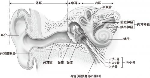 解剖生理をおもしろく学ぶ(増田敦子著、サイオ出版).png