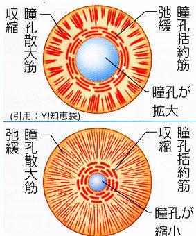 瞳孔の仕組み