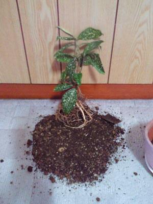 植物の根っこ