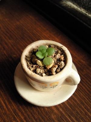 カップの中の植物