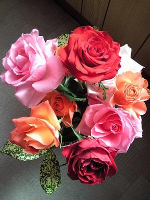 薔薇の花たち