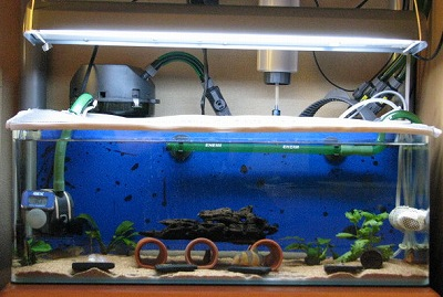 紹介用熱帯魚水槽