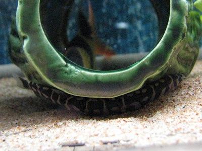 緑でか土管クーリー