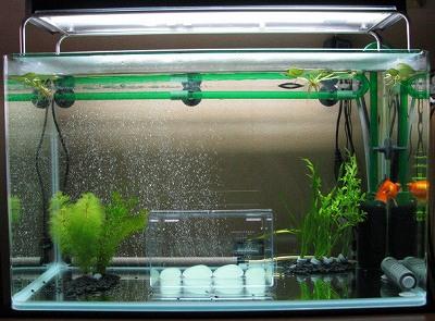 金魚水槽の水草