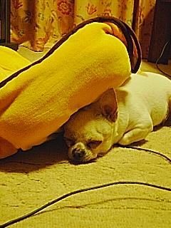 ショートふて寝