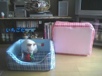 new bed 1