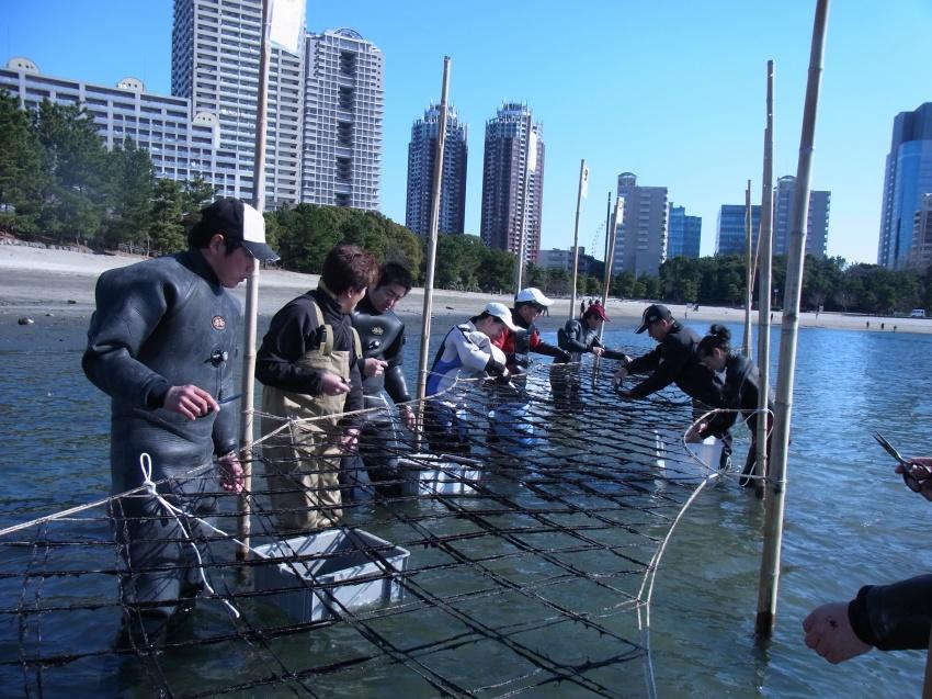 海苔摘み作業