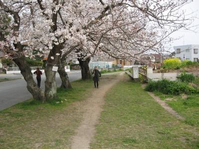 桜2009033102