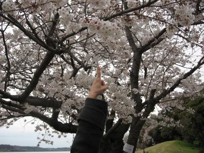 桜2009033103