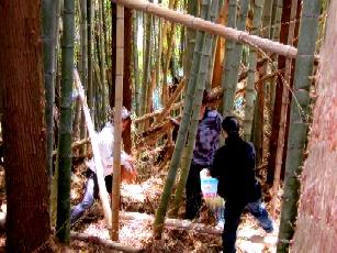 竹やぶにて。