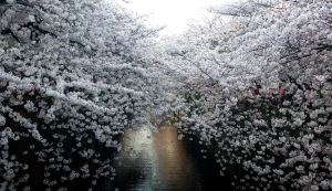 2015-03-31-00-54-46_deco.jpg