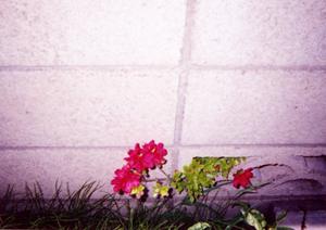 存在感ある花