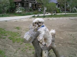 木馬とでん