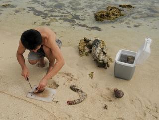 カサゴと貝とうつぼと私