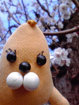 ばな夫と梅の木