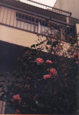 sh01-06.jpg