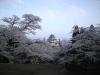 090416桜2
