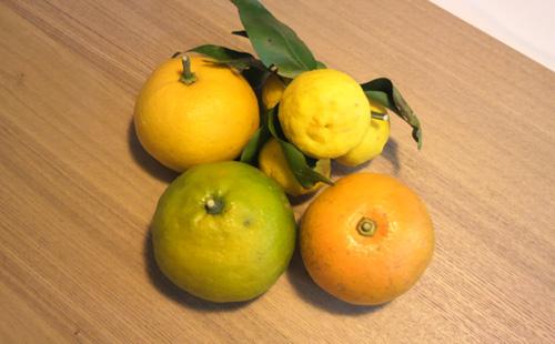 島の柑橘類