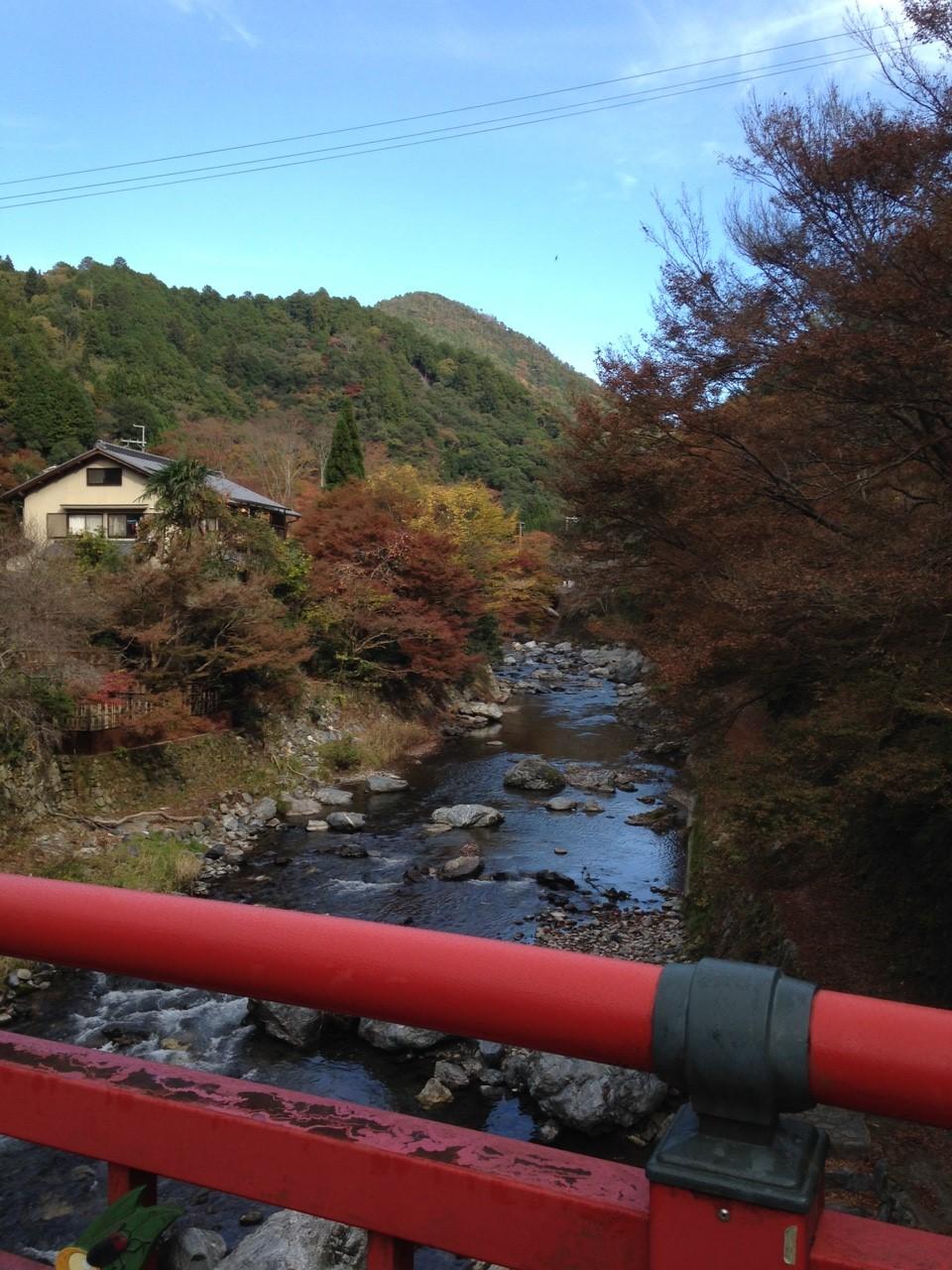 11月12日 愛宕山_2824.jpg