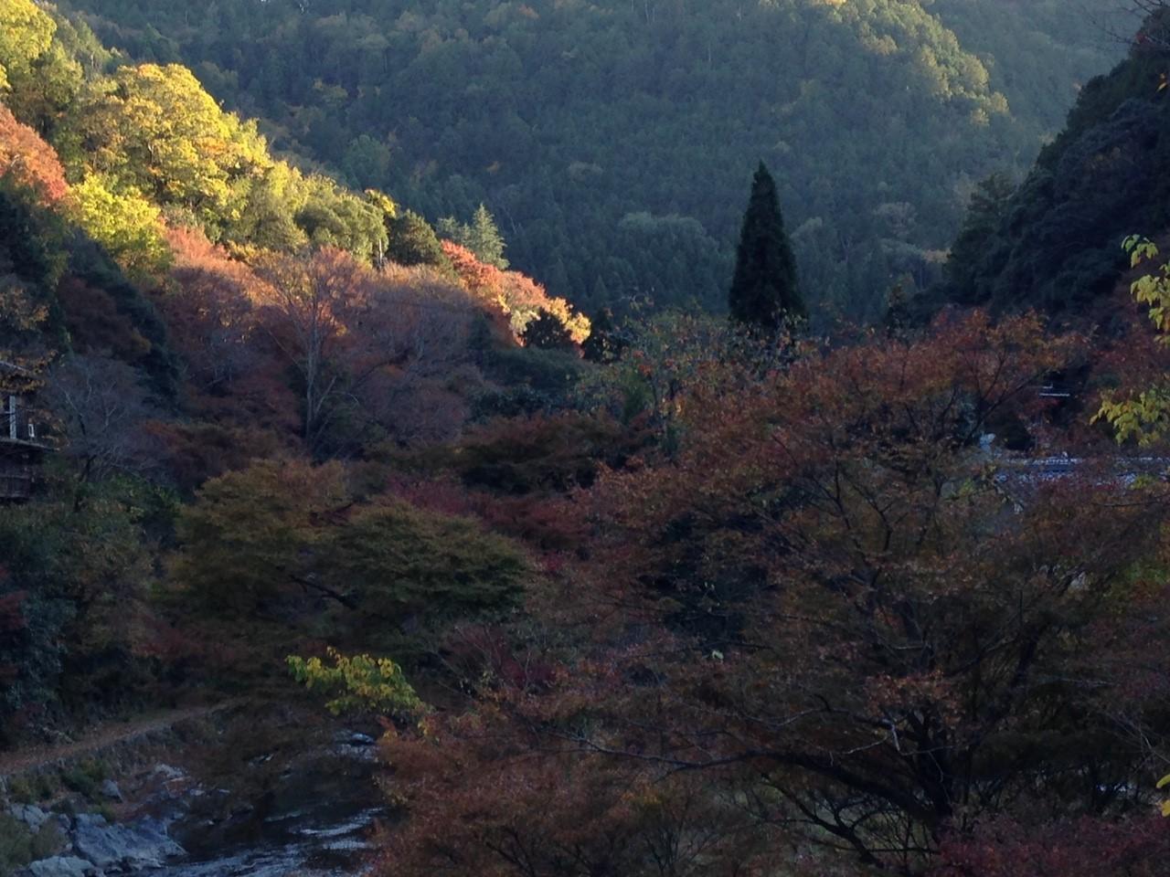 11月12日 愛宕山_5874.jpg
