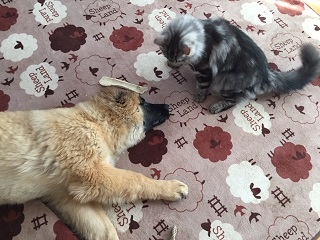ちび猫とチビ犬のバトル