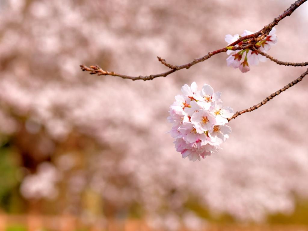 梅原山 専長寺のブログです。
