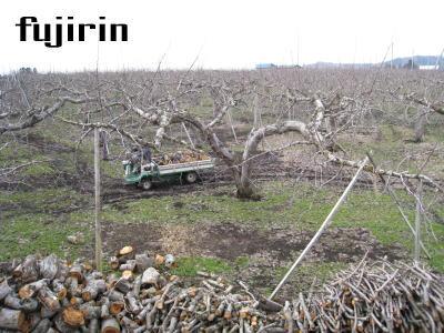 りんご園3