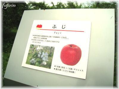 弘前市りんご公園2