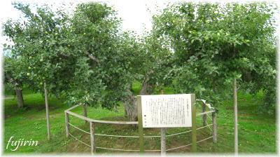 弘前市りんご公園6