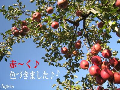秋の収穫写真1