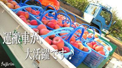 秋の収穫写真6