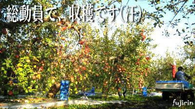 秋の収穫写真7