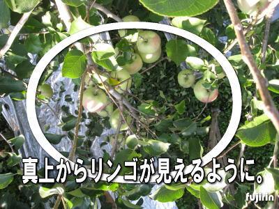 葉とりの極意2