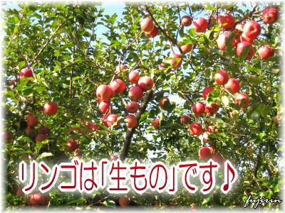 りんごは生もの