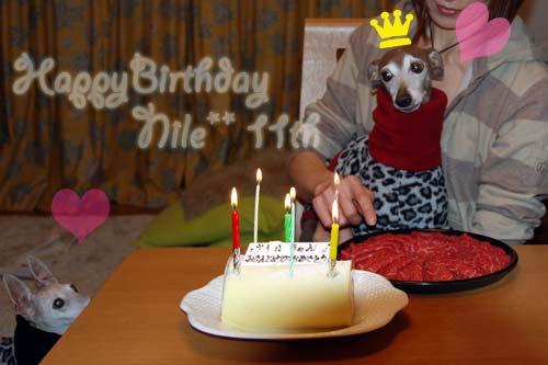 *〜ナイルの11歳の誕生日〜*