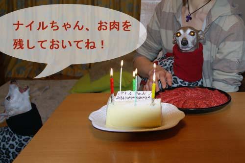 *〜ナイルの11歳の誕生日vol.2〜*