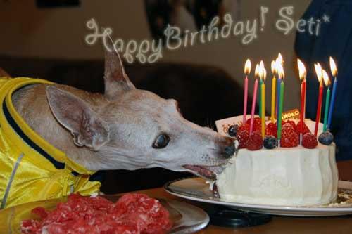 *〜セティの誕生日1〜*